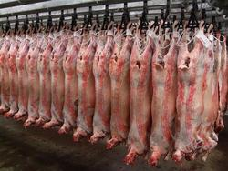 HALAL LAMB/ SHEEP / GOAT CARCASSES BRAZIL ORIGIN
