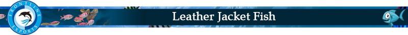 leather Jacket_Title.jpg
