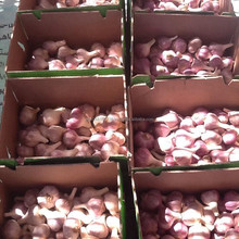 Fresh Red Garlic