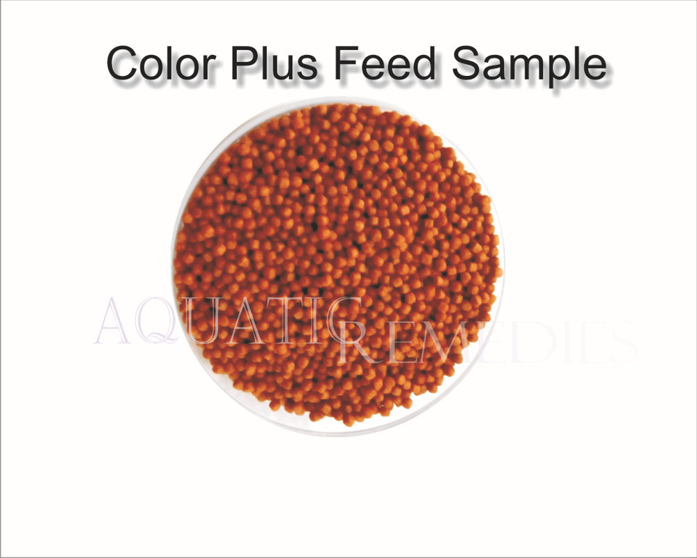 Gene Eleven - Ornamental Fish Food Color Plus - > 40% Protein Rich ...
