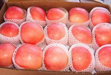 2015 fresh fruit fuji apple wholesale for dubai