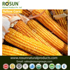 Organic and Conventional whole Dry yellow Maize - ROSUN NATURAL PRODUCTS PVT LTD