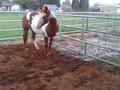 cheval de literie en chine