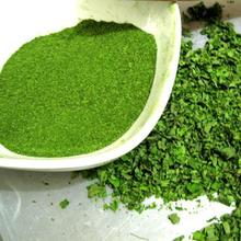 Sell Tropical Moringa