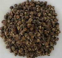 Moringa PKM1 seed, Moringa seed oleifera, drumstick seed pkm1