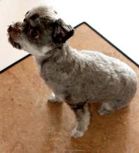 Pet Bed, cat and dog, comfort underlay, Cork carpet, Versacork Carpet