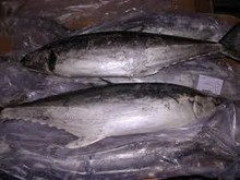 Frozen yellowfin tuna fish on sale