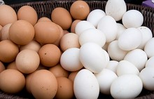Broiler fertilized chicken eggs for sale / Cheap Quality Fresh Chicken Eggs Exporters, Cobbs and Ross