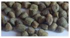 Ervilhaca sementes