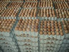 /product-tp/fresh-table-eggs-50015790522.html