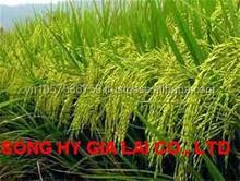 rice long grain best price