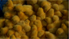Layer day old Chicks for sale/COMMERCIAL LAYER CHICKENS/NOVEOGEN, HY-LINE, LOHMANN