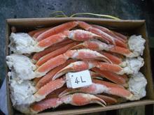 Alta calidad y sabrosas cangrejo de nieve para pasado por agua, cocido largas secciones