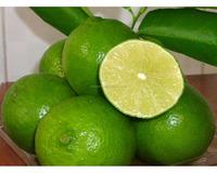 Fresh seedless lemon with best price from Viet Nam