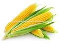 Maïs jaune origine indienne- d'aliments pour animaux