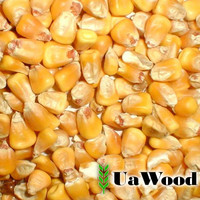 Yellow corn for animal feeding