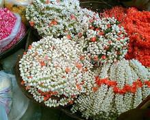 Fresh Jasmine Flowers Available...