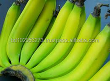 Fresh Cavendish Banana from Bangladesh more competitive price
