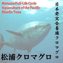 It would be very delicious and make a dried fish in Matuura bluefin tuna.
