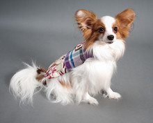 2014 New Dog Apparels,Pet Clothing,Dog Leather Collas & Leashes