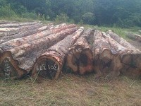 WAMARA Logs or Lumber - Ideal for exotic furniture & floors. Also, PURPLEHEART, MORA, GREENHEART & other exotic logs and lumber.