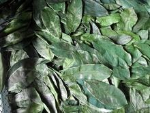 Graviola Guyabano Soursop Dried Leaves