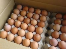 High Quality Healthy chicken eggs both white and brown shell for sell