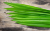 Pandan Essence - Aromatic Flavor for milled rice