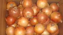 Fresh and compatitve price Yellow Onion from Vietnam