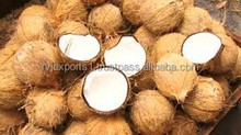 Export quality matured coconut