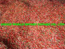 Fresh Chilli - BEST PRICE & NEW CROP 2014
