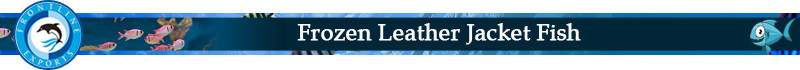 Frozen Leather Jacket Fish Title.jpg