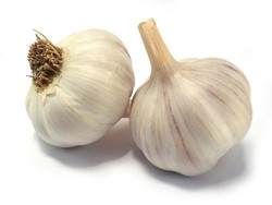 Fresh Garlic/ While garlic