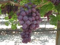 fresh thomson seedless grapes,Thompson Seedless Grapes