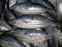 Frozen Skipjack Fish Seafood
