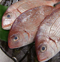 Best Quality Fresh Frozen Whole Round Red Seabream Fish