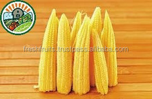 Good Quality and Best Price Baby Corn in Fresh Fruits Packing Factory