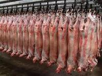Cheap Price Halal Chilled Lamb / Goat Meat Carcass / Sheep Carcass Chilled Fresh