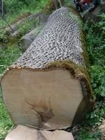 European Ash logs