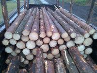 European Spruce and Poplar logs