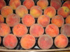 Fresh Peaches for export from Egypt