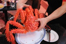 Hotsale chilien king crabs