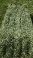 Rhods Grass