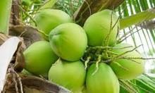[Green Coconut