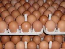 Best Fresh white and brown Chicken Eggs