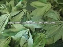 Frozen cassava leaves rectangular, Frozen Vegetable