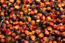 RBD palm oil olien CP-10/CP 08