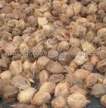 Good Quality Matured coconut exports to Korea