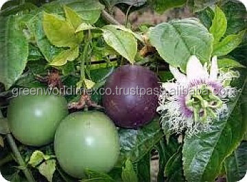 PASSION FRUIT COMPETITIVE PRICE FROM GREENWORLD COMPANY!!!!!!!!!!!1