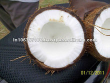 Fresh Indian Semi Husked and Husked Coconut At cheap rate